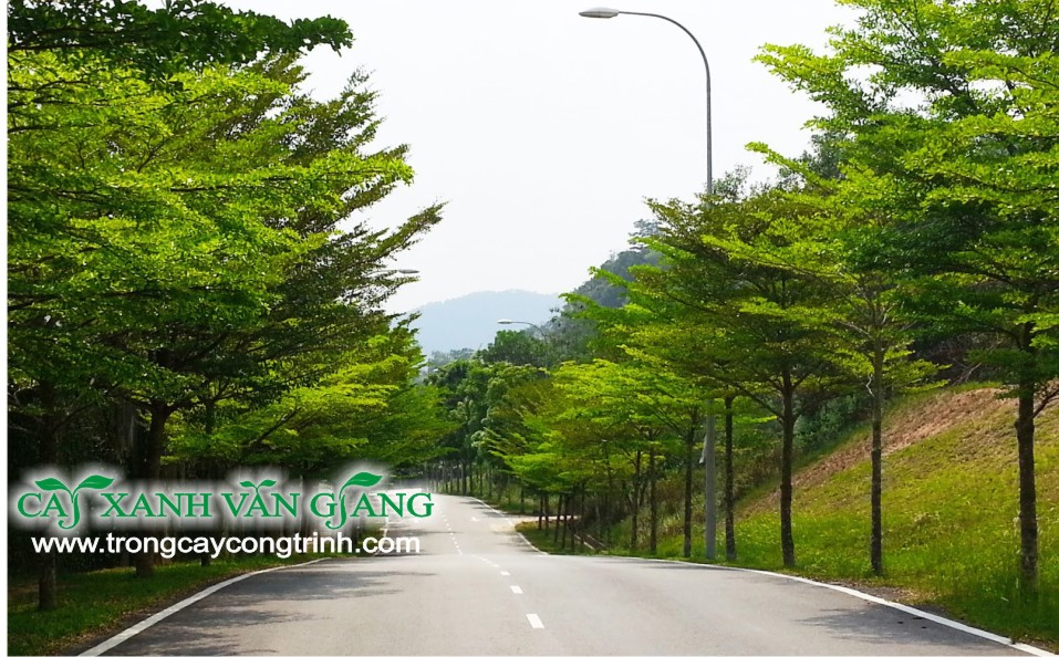 bang dai loan 2