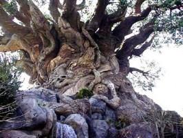 Số với một số hình ảnh cây Thủy tùng to nhất thế giới