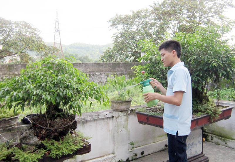 Sửa cây tại nhà
