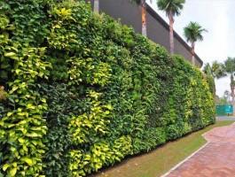 Trồng cây trên vách tường