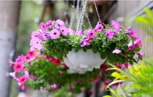12 loại hoa trồng ban công nổi bật nhất phố