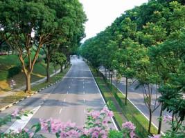 Đơn vị trồng cây xanh công trình đô thị chất lượng và uy tín