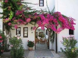 Mẫu cổng nhà từ các loại hoa dây leo thường gặp