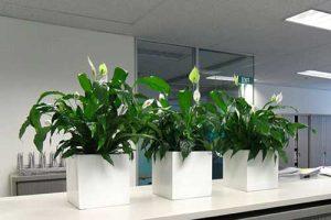 Mách bạn cách trồng cây xanh trong chậu hiệu quả