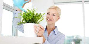 Bí quyết chăm sóc cây xanh trong nhà nhất định bạn không thể bỏ qua