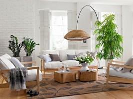 Những điều cần chú ý khi thiết kế cây xanh trong phòng khách