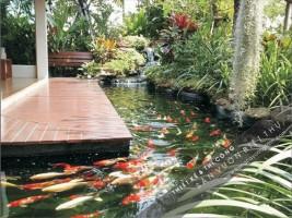 Trồng cây xanh sân vườn biệt thự  – Thi công Hồ cá Koi tại Khu đô thị Bắc An Khánh
