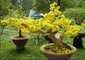 Những loại cây thường được trồng dịp cuối năm