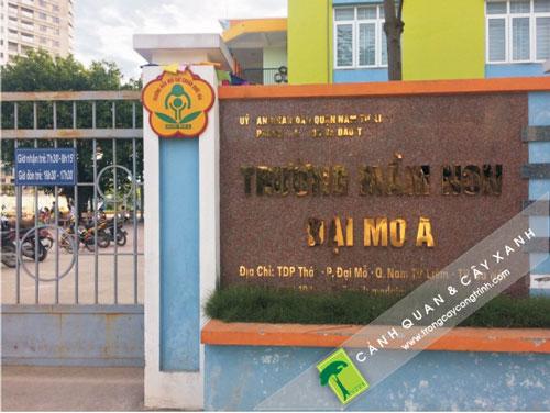 thi-cong-canh-quan-truong-dai-mo