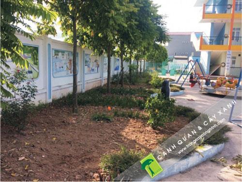 Ưu điểm khi thi công cây xanh vào cuối công trình