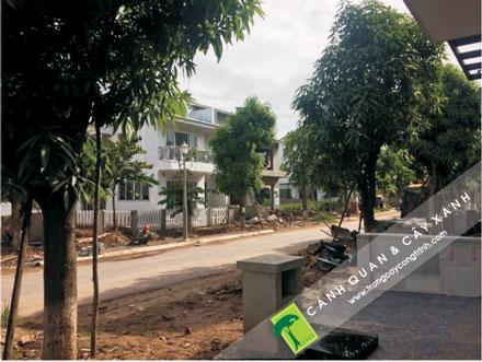 xác định vị trí trồng cây công trình