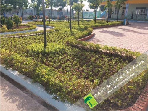 trồng cây xanh trong vườn hoa và công viên