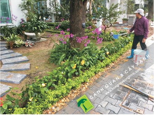 Không gian sân vườn biệt thự