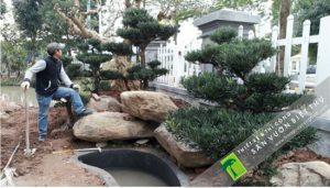 Đơn vị thiết kế cảnh quan cây xanh biệt thự