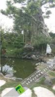 Trồng cây xanh biệt thự tư gia – Thi công Hồ cá Koi tại Ba vì – Hà Nội