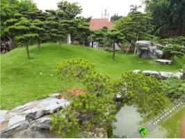 Trồng cỏ công trình trong thiết kế cảnh quan biệt thự(P1)