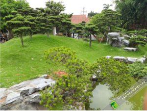 thiết kế thảm cỏ công trình trong sân vườn