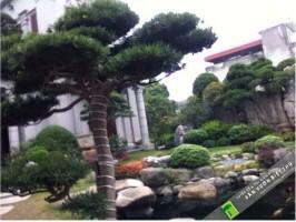 Thi công cây xanh tạo cảnh quan môi trường đô thị