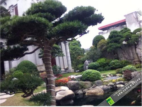 trồng cây xanh trong đô thị