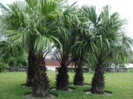 Những loại cây xanh tuyệt đối không đặt trong nhà