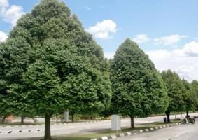 Tác dụng của cây xanh khu công nghiệp