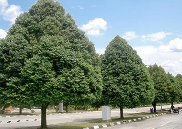 Vai trò của cây xanh trong khu công nghiệp