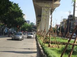 Những bước trồng cây công trình khu vực đô thị