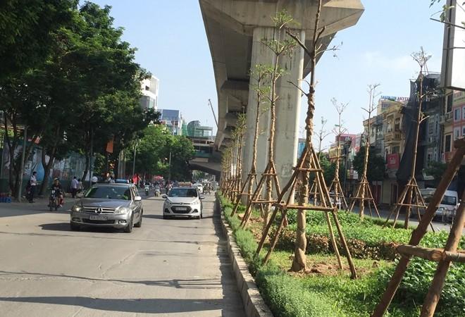 trồng cây công trình đô thị