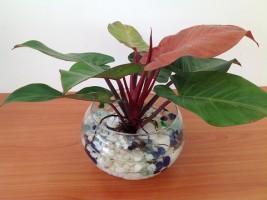 Trồng những loại cây nào trong văn phòng để tăng tài lộc