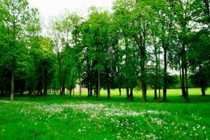 Lợi ích của việc trồng cây xanh đối với con người