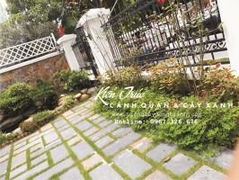 Trồng cỏ công trình trong thiết kế cảnh quan biệt thự(P2)