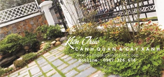 Trồng cỏ công trình trong thiết kế cảnh quan biệt thự