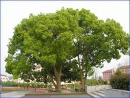 Trồng cây công trình. Phân loại cây xanh công trình