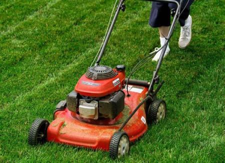 chăm sóc cỏ sau khi trồng