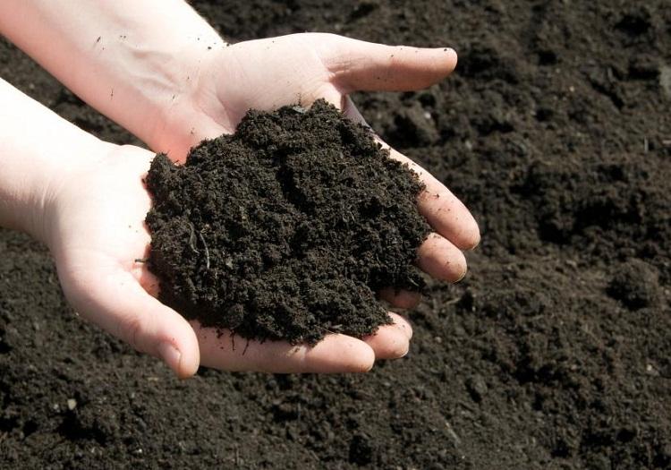chuẩn bị đất trồng cây