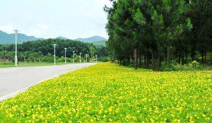Tổng hợp các loại cỏ trồng công trình đang được sử dụng nhiều nhất