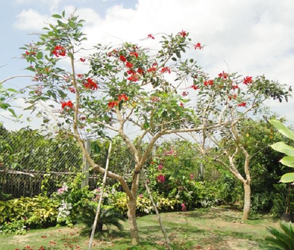 Cay-osaka-do