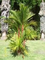 Mua cây xanh ngoại thất ở đâu uy tín tại Hà Nội