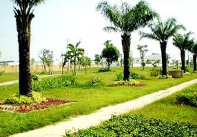 Quy trình trồng cây công trình trường học, bệnh viện, khu công nghiệp