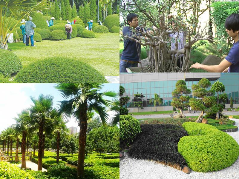 Dịch vụ trồng cây xanh trang trí sân vườn
