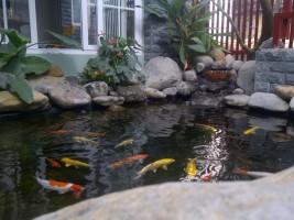 Cách lựa chọn cây phong thủy sân vườn phù hợp