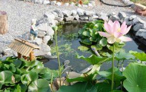 Chiêm ngưỡng mẫu thiết kế hồ cá koi tuyệt đẹp ngày Tết