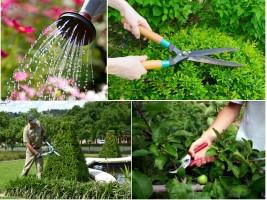 Kinh nghiệm chăm sóc cây xanh trong sân vườn