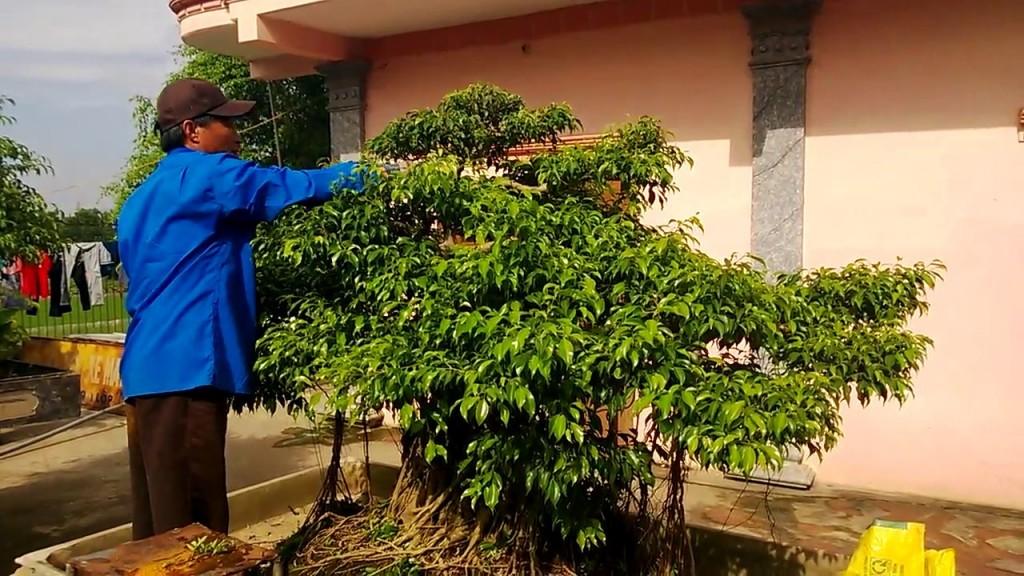 Kỹ thuật cắt tỉa cây