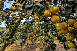 Những giống cây trồng mang lại hiệu quả kinh tế cao cho bà con