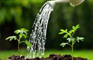 Hướng dẫn chăm sóc cây xanh trong vườn.