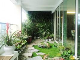Cây xanh cho nhà chung cư- biện pháp làm tươi mát không gian hiệu quả