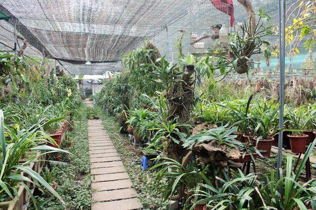 sử dụng cáp bọc nhựa làm lưới trồng lan