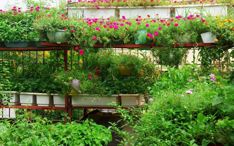 Kho vườn trồng cây hoa