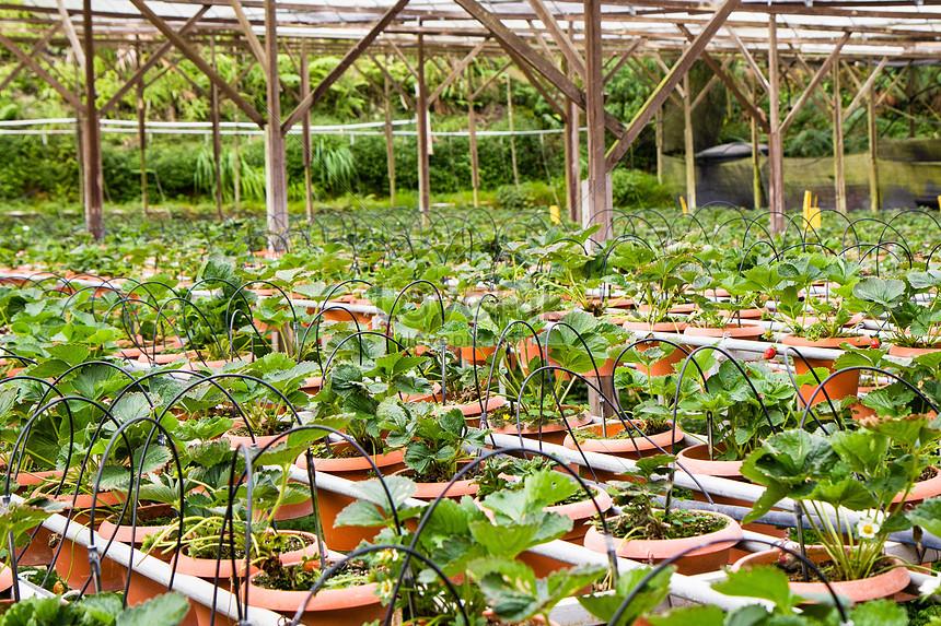 Vườn ươm trồng cây tại Văn Giang - Hưng yên